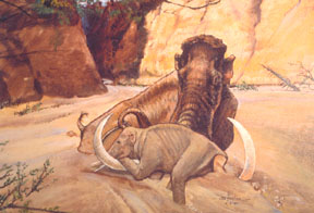 Baylor University Mammoth dig